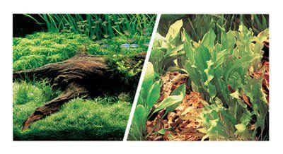 Plante - Plante 49cm